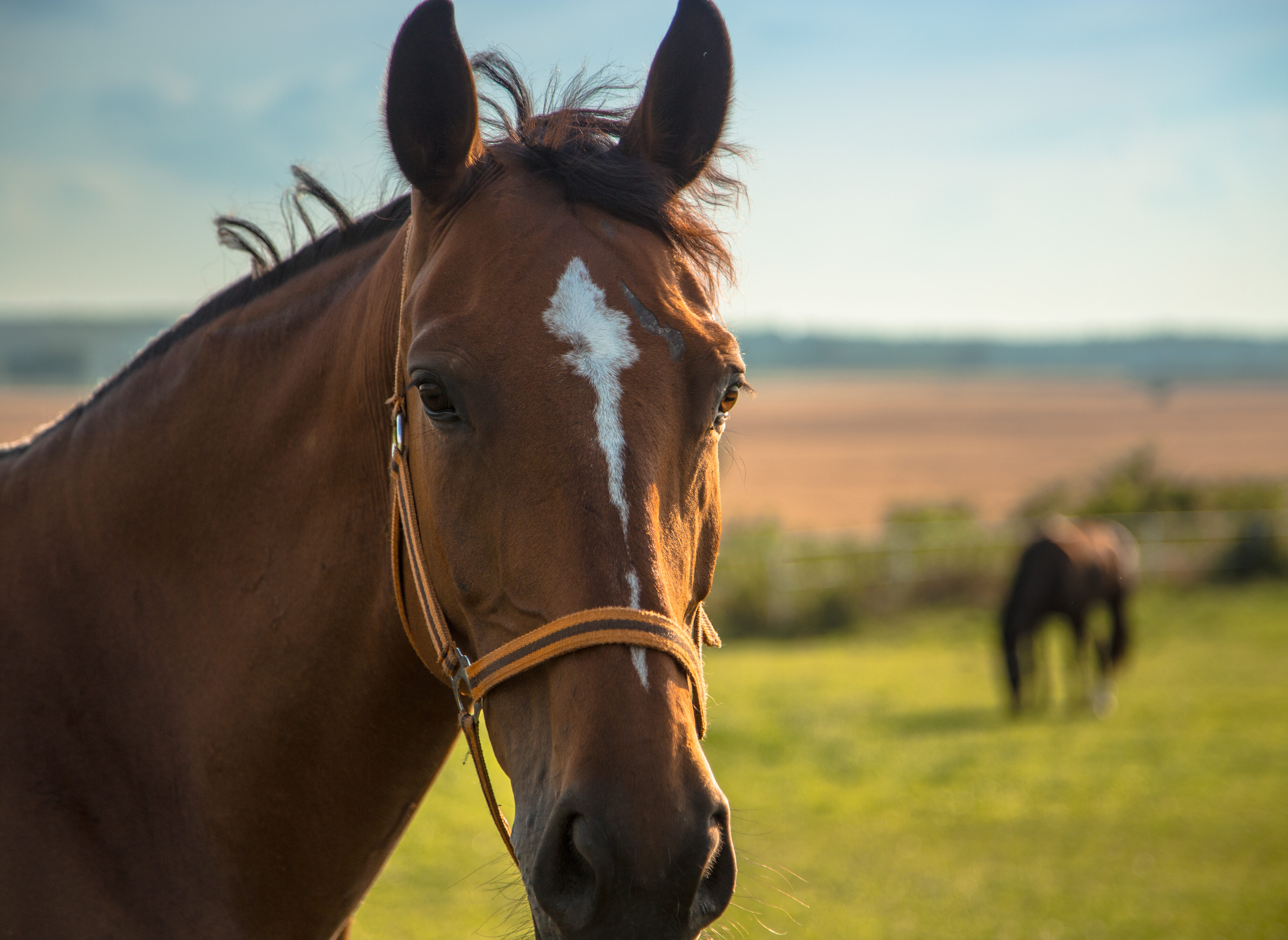 What is second horse syndrome?
